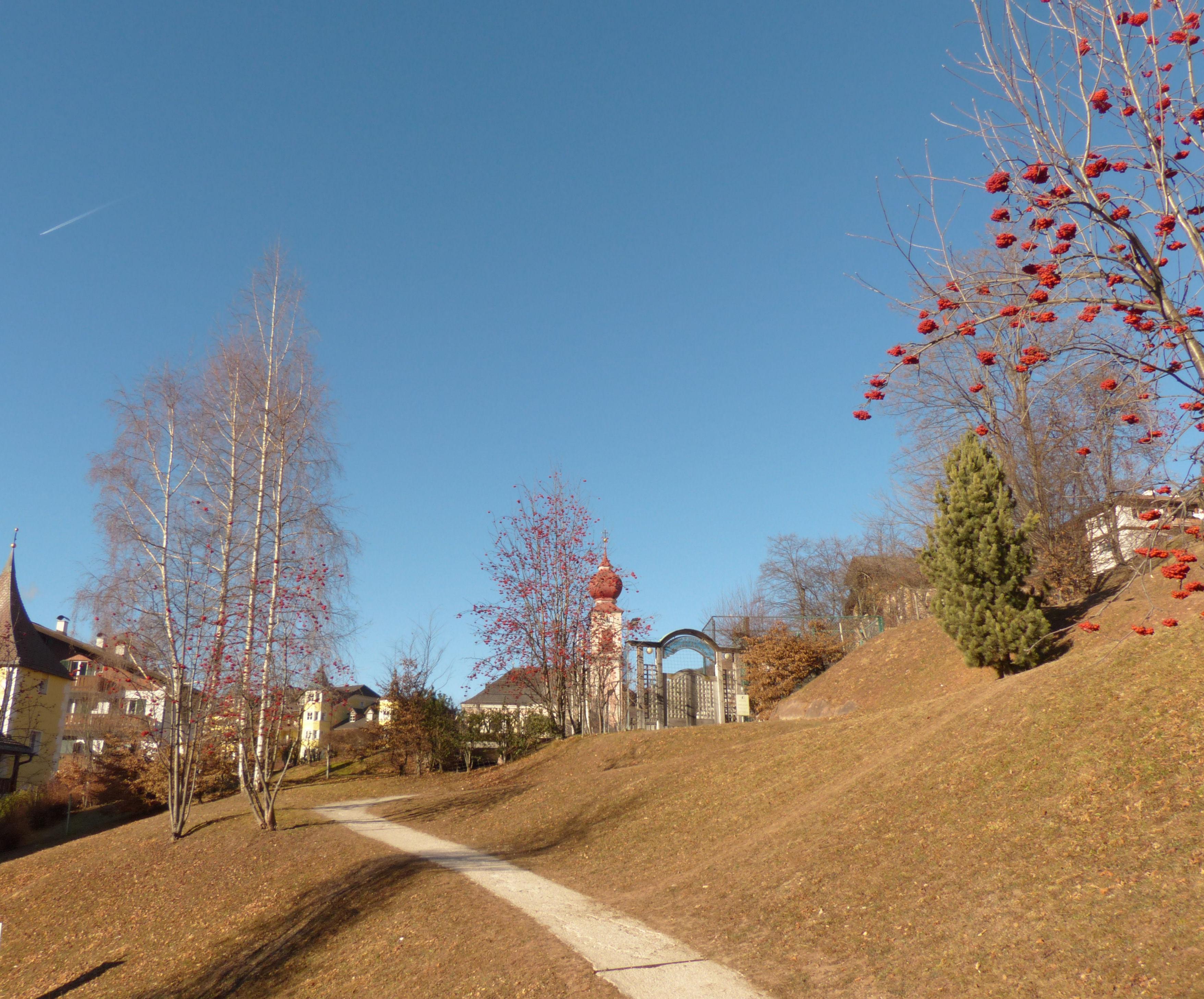 © Dipartimento di Scienze della Vita, Università di Trieste<br>by Andrea Moro<br>Comune di Ortisei / St. Ulrich / Urtijëi, centro urbano, BZ, Trentino-Alto Adige/Südtirol, Italia, 30/12/2016<br>Distributed under CC-BY-SA 4.0 license.