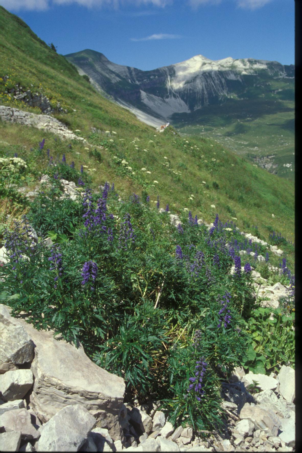 © Parco Nazionale delle Dolomiti Bellunesi<br>by Gianni Poloniato<br>Italia,