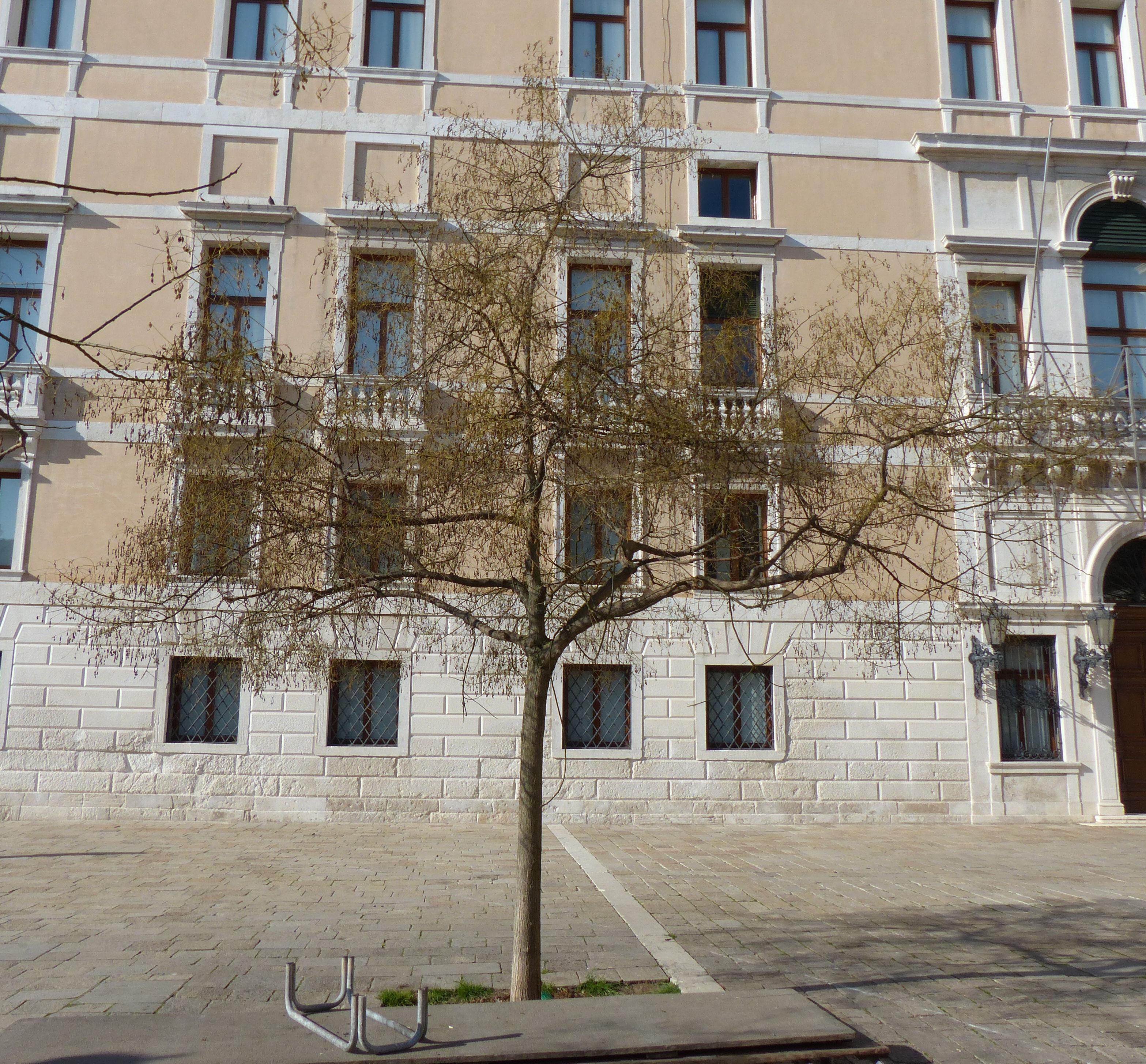 © Dipartimento di Scienze della Vita, Università di Trieste<br>by Andrea Moro<br>Comune di Venezia, Sestiere di San Marco, VE, Veneto, Italia, 11/03/2017<br>Distributed under CC-BY-SA 4.0 license.