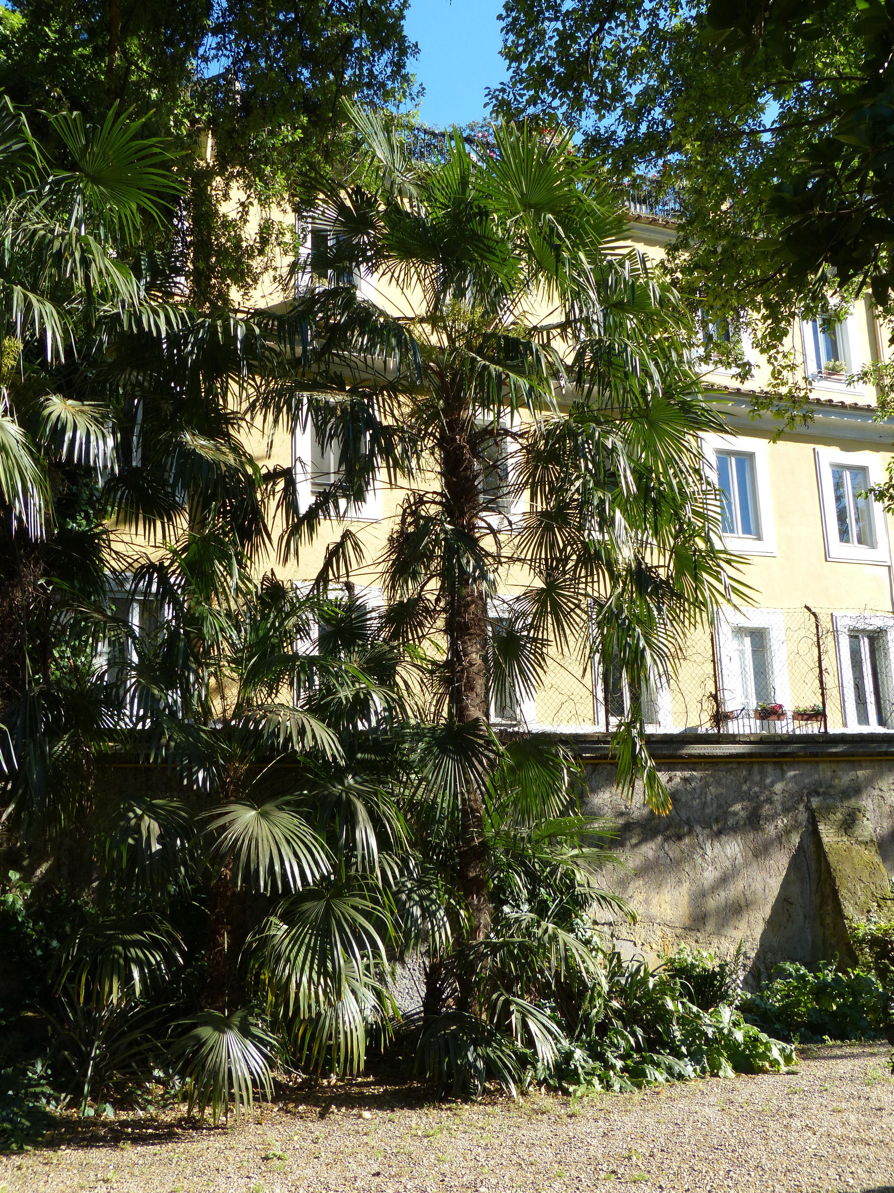 © Dipartimento di Scienze della Vita, Università di Trieste<br>by Andrea Moro<br>Comune di Roma, Orto Botanico dell'Università di Roma, Roma, Lazio, Italia, 02/05/2017<br>Distributed under CC-BY-SA 4.0 license.