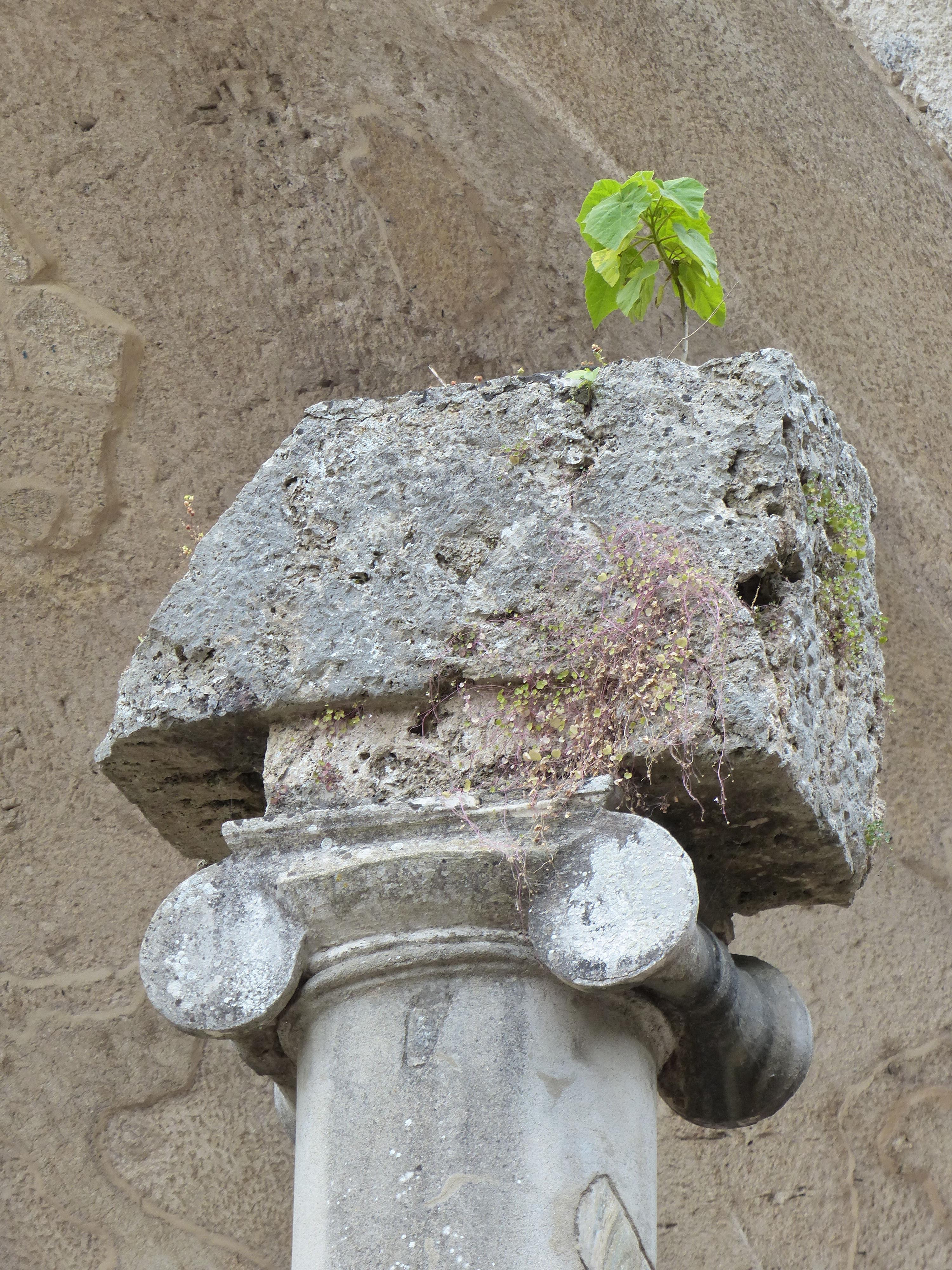 © Dipartimento di Scienze della Vita, Università di Trieste<br>by Andrea Moro<br>Comune di Tivoli, Villa adriana, area archeologica, Roma, Lazio, Italia, 06/06/2017<br>Distributed under CC-BY-SA 4.0 license.