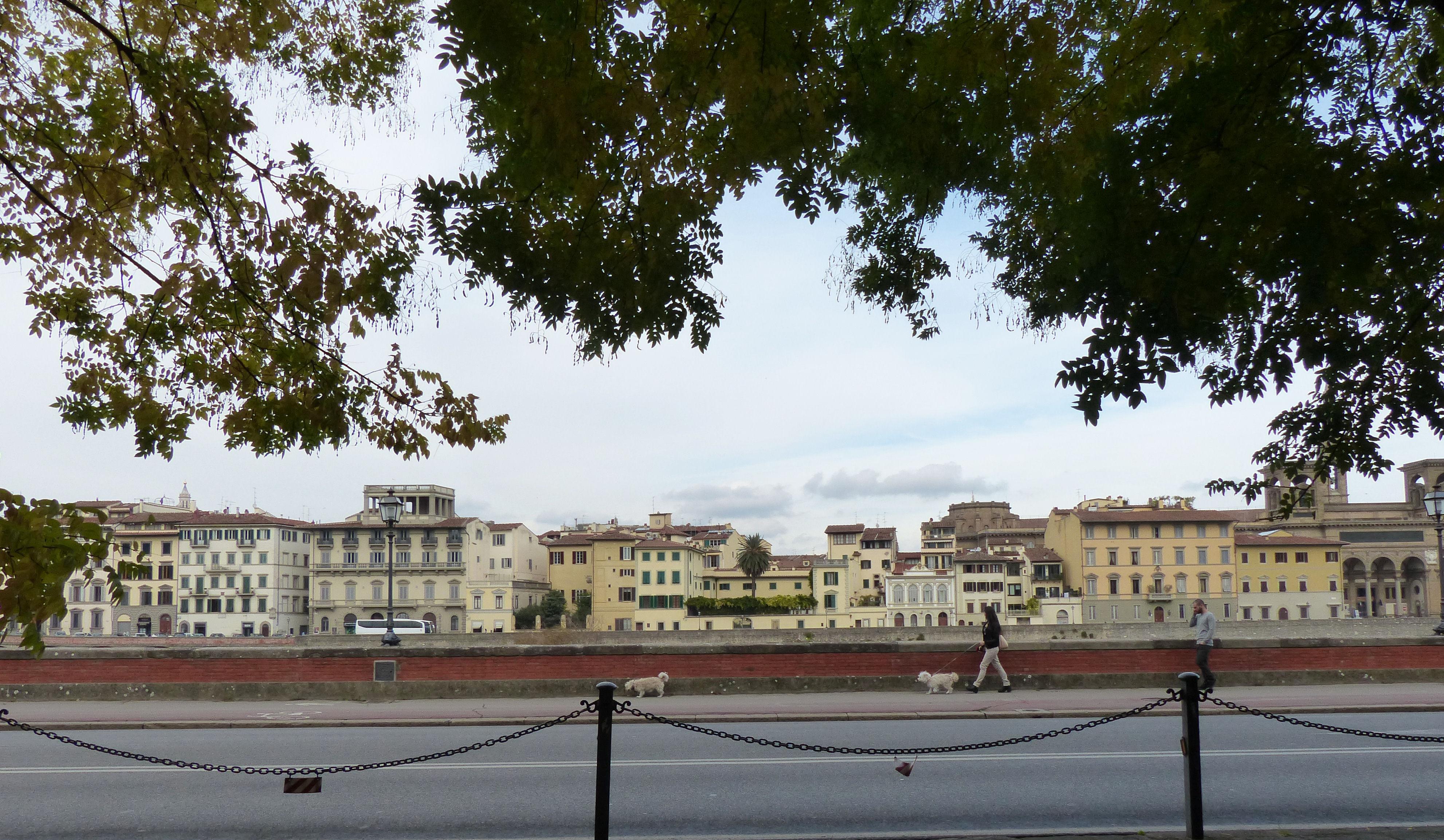 © Dipartimento di Scienze della Vita, Università di Trieste<br>by Andrea Moro<br>Comune di Firenze, Centro storico, FI, Toscana, Italia, 02/11/2017<br>Distributed under CC-BY-SA 4.0 license.