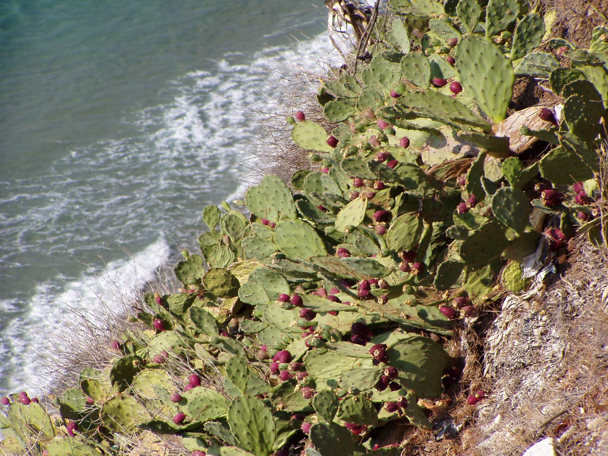 © Alessandro Guiggi<br>Ventimiglia, IM, Liguria, Italy, 13.09.2007