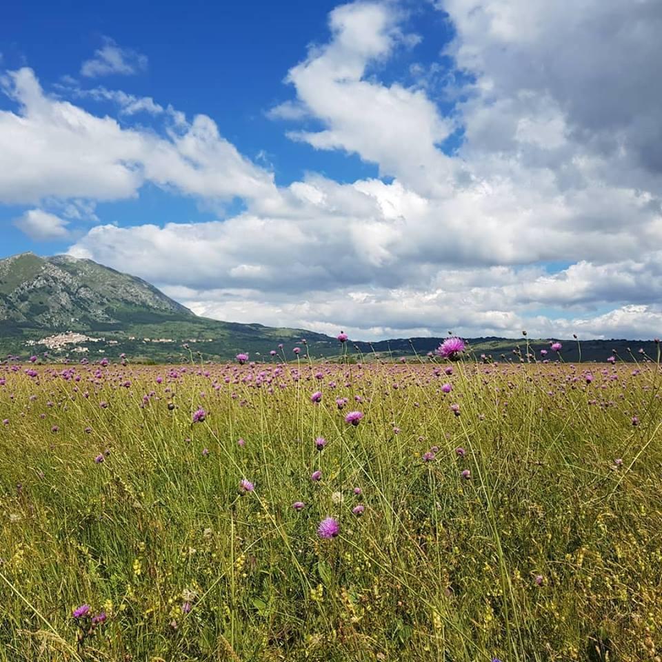 © Fabrizio Bartolucci - Centro Ricerche Floristiche Dell'Appennino, Barisciano AQ<br>Parco del Sirente-Velino, Italy,