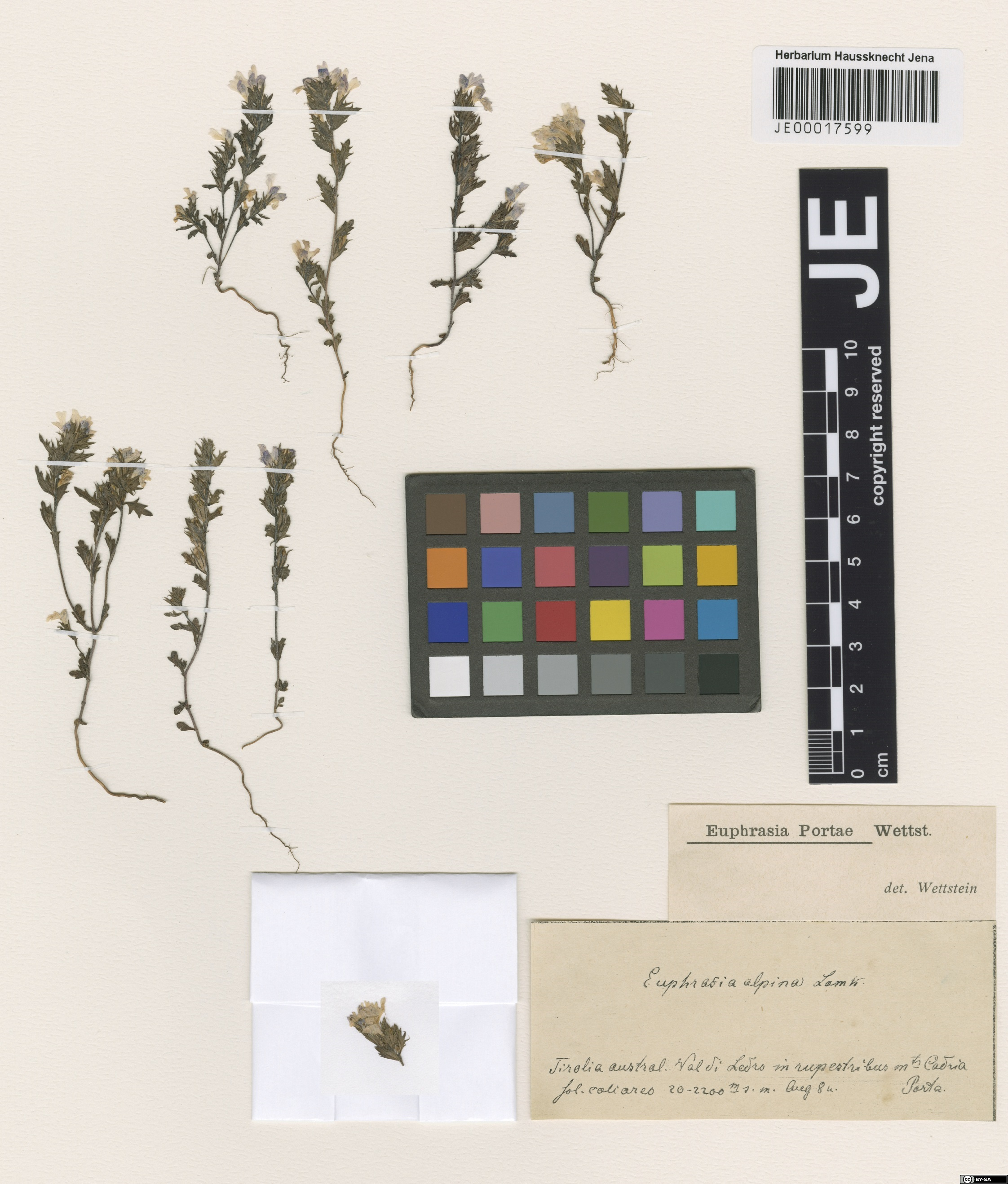 Herbarium JE 00017599 – Source: http://herbarium.univie.ac.at/database/detail.php?ID=310797<br>by