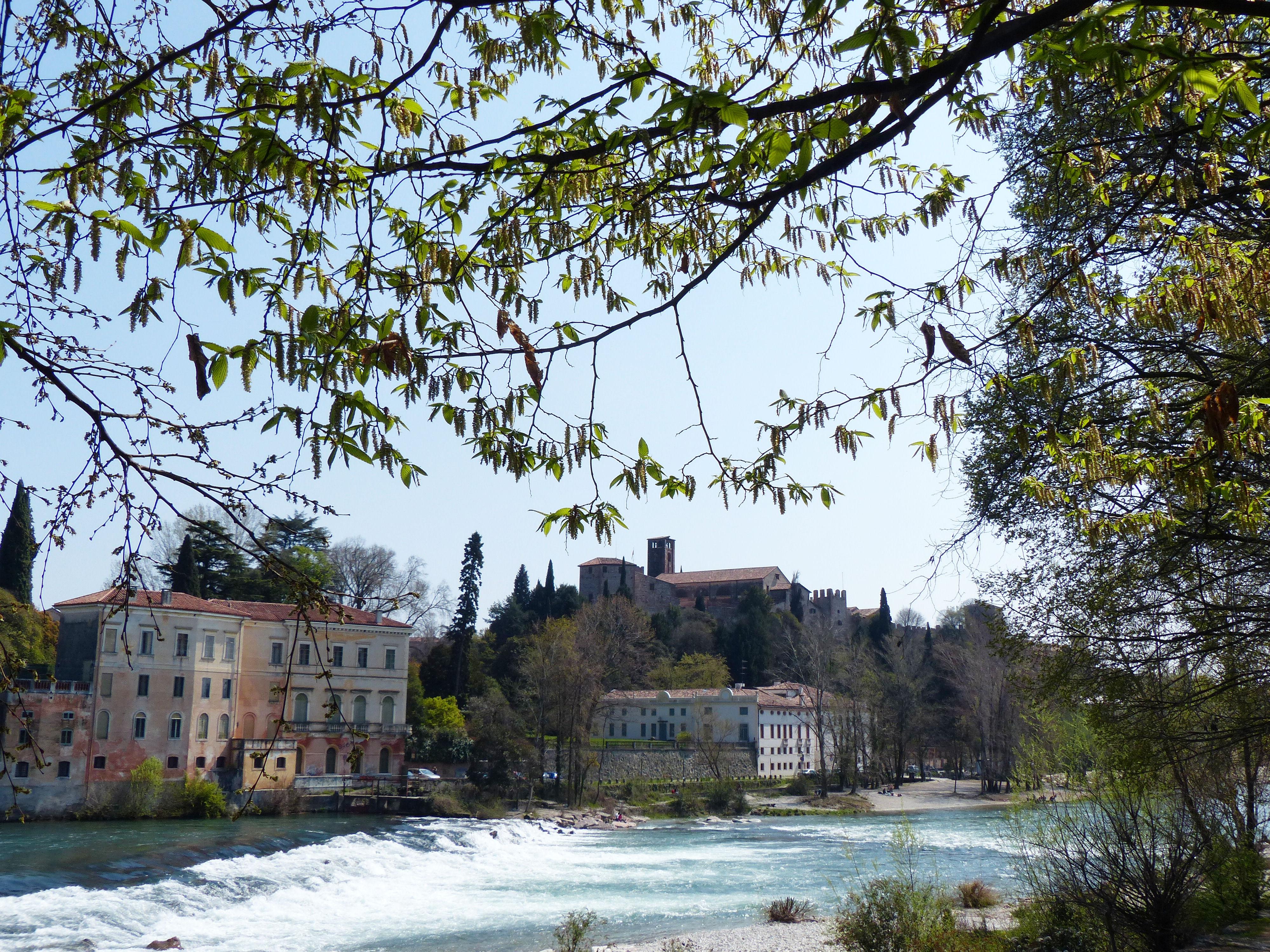 © Dipartimento di Scienze della Vita, Università di Trieste<br>by Andrea Moro<br>Comune di Bassano del Grappa, rive del fiume Brenta, VI, Veneto, Italia, 06/05/2018<br>Distributed under CC-BY-SA 4.0 license.