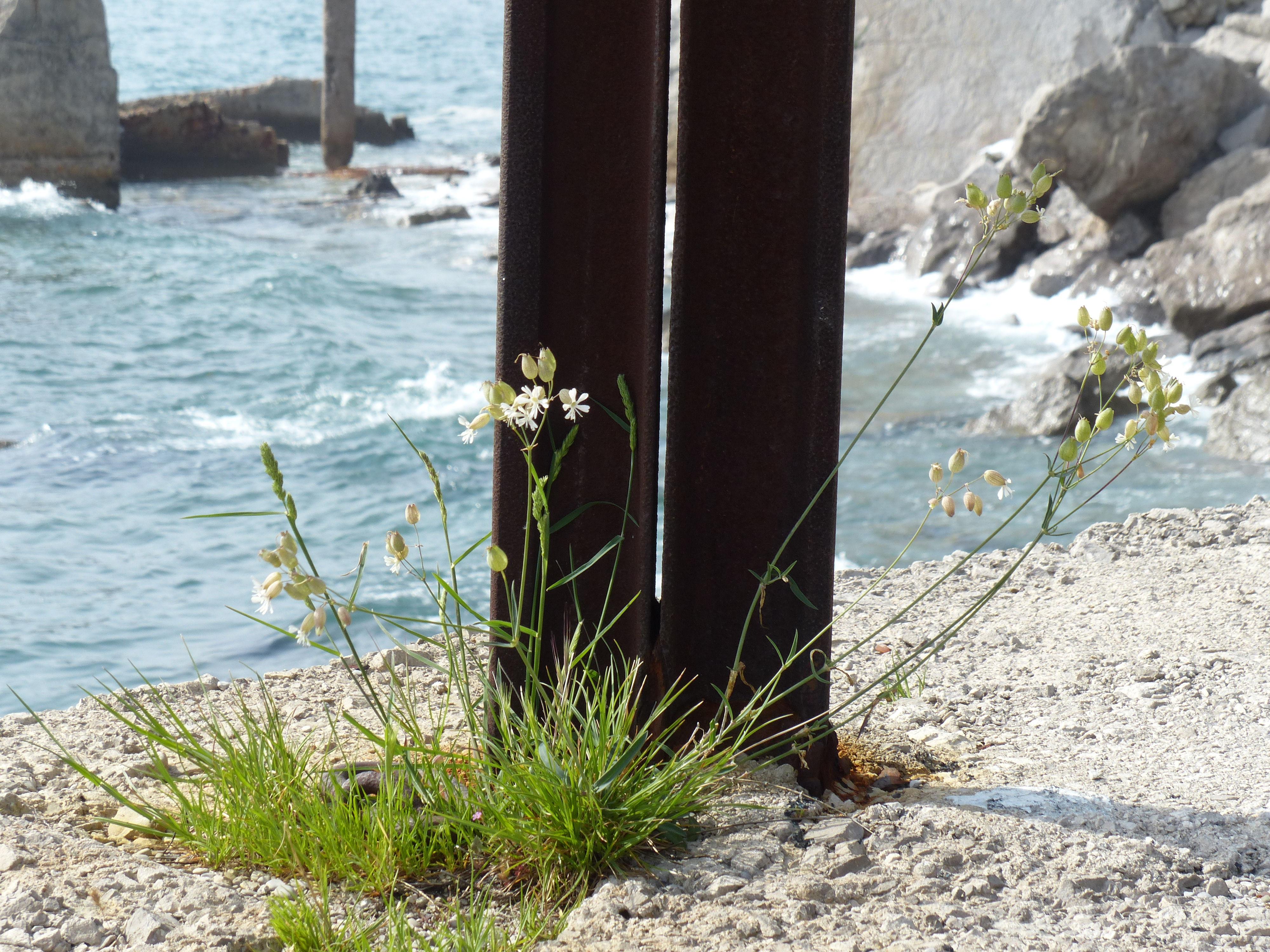 © Dipartimento di Scienze della Vita, Università di Trieste<br>by Andrea Moro<br>Comune di Duino-Aurisina / Devin-Nabrežin, litorale, TS, Friuli Venezia Giulia, Italia, 25/04/2019<br>Distributed under CC-BY-SA 4.0 license.