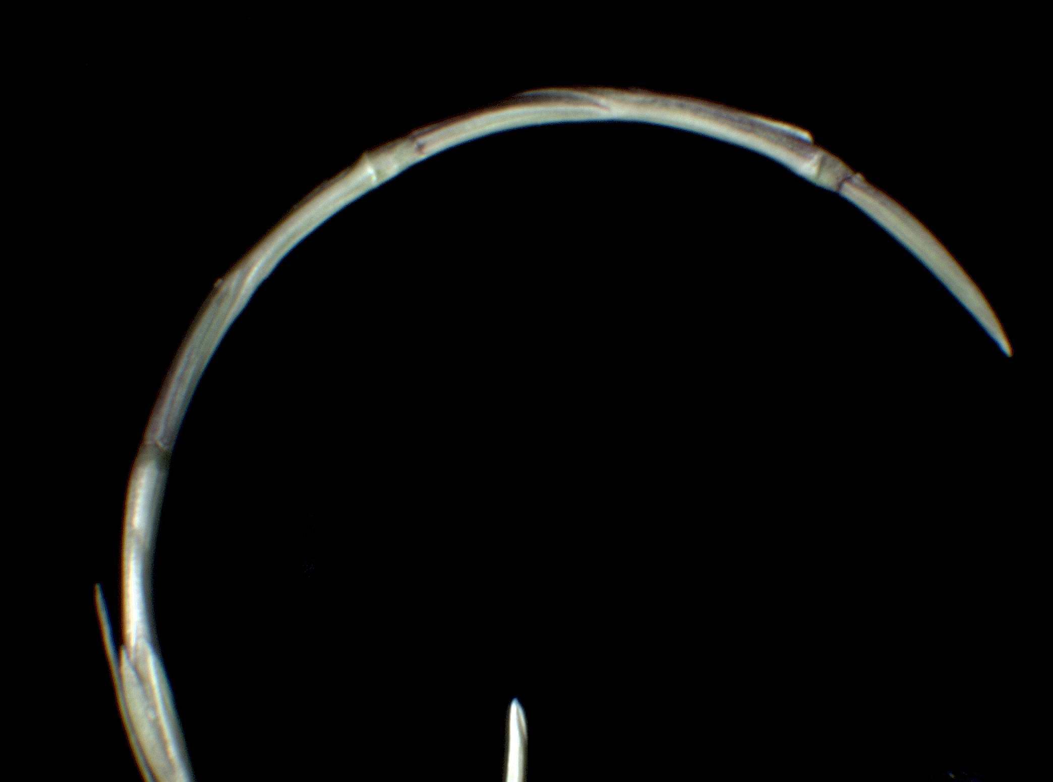 © Dipartimento di Scienze della Vita, Università degli Studi di Trieste<br>by A. Moro<br>Isole Tremiti, FG, Puglia , Italia, 17/2/04 0.00.00<br>Distributed under CC-BY-SA 4.0 license.