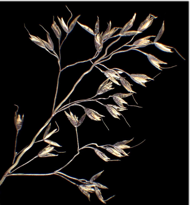 © Dipartimento di Scienze della Vita, Università degli Studi di Trieste<br>by Andrea Moro<br>Comelico, Val Digon, sopra Casera Pian Formaggio, La Pitturina., BL, Veneto, Italia, 23/11/04 0.00.00<br>Distributed under CC-BY-SA 4.0 license.