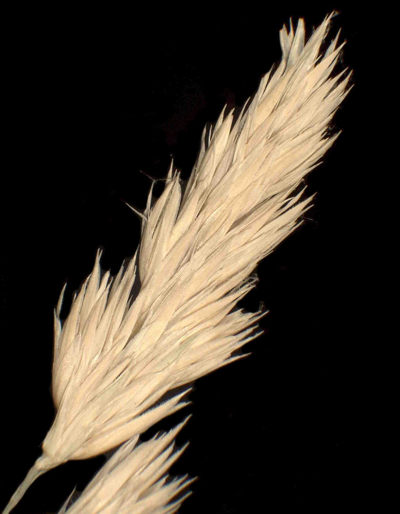 © Dipartimento di Scienze della Vita, Università degli Studi di Trieste<br>by Andrea Moro<br>Prealpi Carniche, Juf di Maniago, bosco misto di latifolie., PN, FVG, Italia, 23/11/04 0.00.00<br>Distributed under CC-BY-SA 4.0 license.