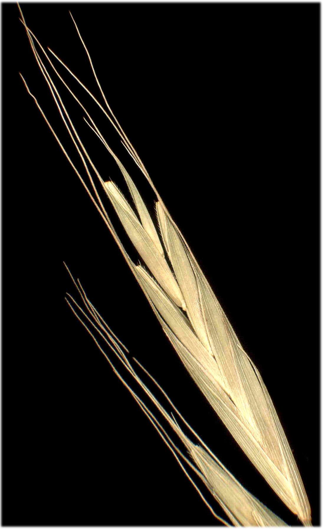 © Dipartimento di Scienze della Vita, Università degli Studi di Trieste<br>by Andrea Moro<br>Alpi Carniche, Val Pesarina, presso il Rio Possal., UD, FVG, Italia, 3/12/04 0.00.00<br>Distributed under CC-BY-SA 4.0 license.