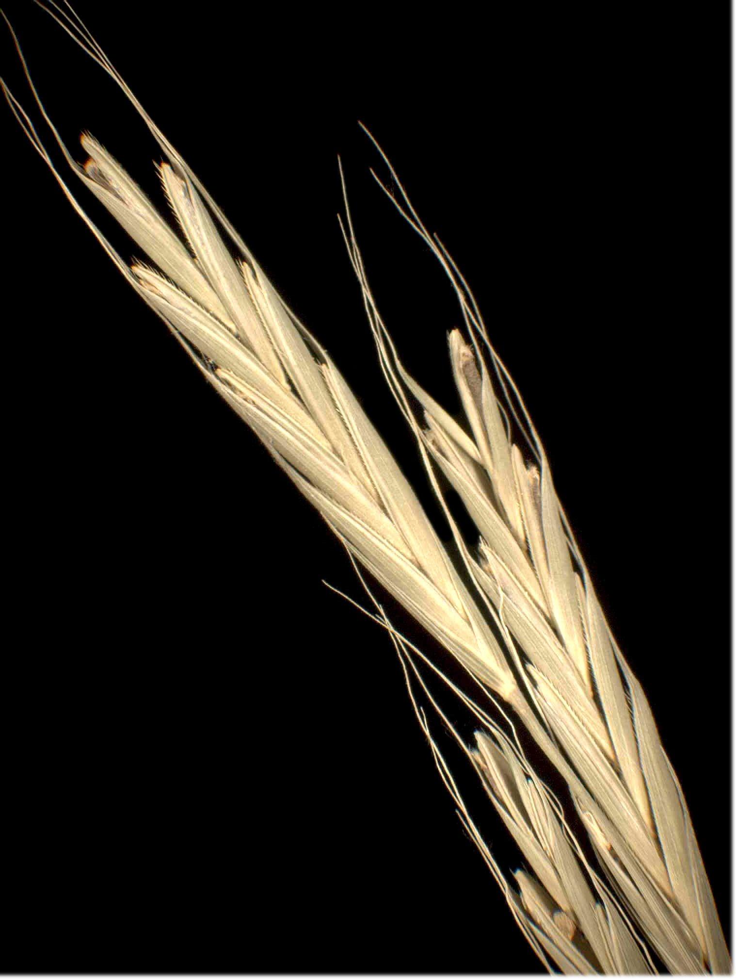© Dipartimento di Scienze della Vita, Università degli Studi di Trieste<br>by Andrea Moro<br>Comune di Trieste, località Cologna, in querceto-castagneto., TS, FVG, Italia, 3/12/04 0.00.00<br>Distributed under CC-BY-SA 4.0 license.