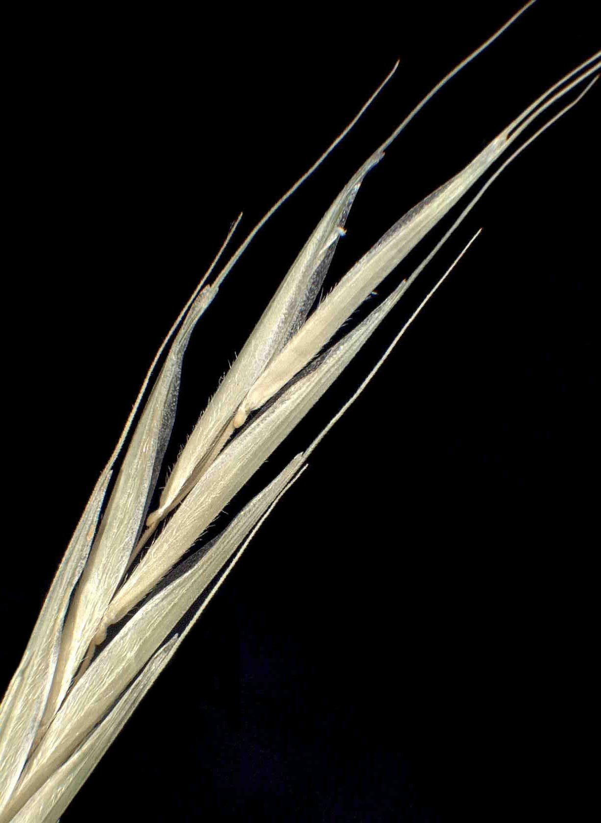 © Dipartimento di Scienze della Vita, Università degli Studi di Trieste<br>by Andrea Moro<br>Comune di Ampezzo, località Oltris., UD, FVG, Italia, 12/12/04 0.00.00<br>Distributed under CC-BY-SA 4.0 license.