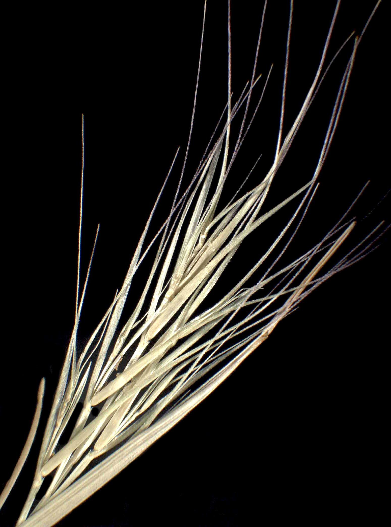 © Dipartimento di Scienze della Vita, Università degli Studi di Trieste<br>by Andrea Moro<br>Arcipelago delle Baleari, Isola di Maiorca, vecchia cava. , Spagna, 12/12/04 0.00.00<br>Distributed under CC-BY-SA 4.0 license.