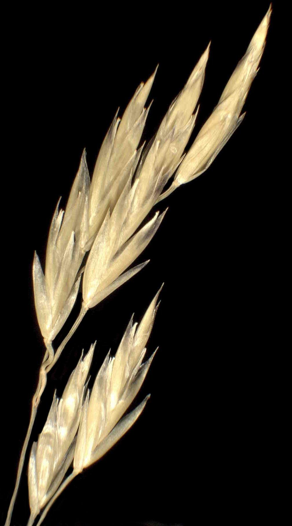 © Dipartimento di Scienze della Vita, Università degli Studi di Trieste<br>by Andrea Moro<br>Prealpi Giulie, pendici del Monte Plauris. , UD, FVG, Italia, 22/12/04 0.00.00<br>Distributed under CC-BY-SA 4.0 license.