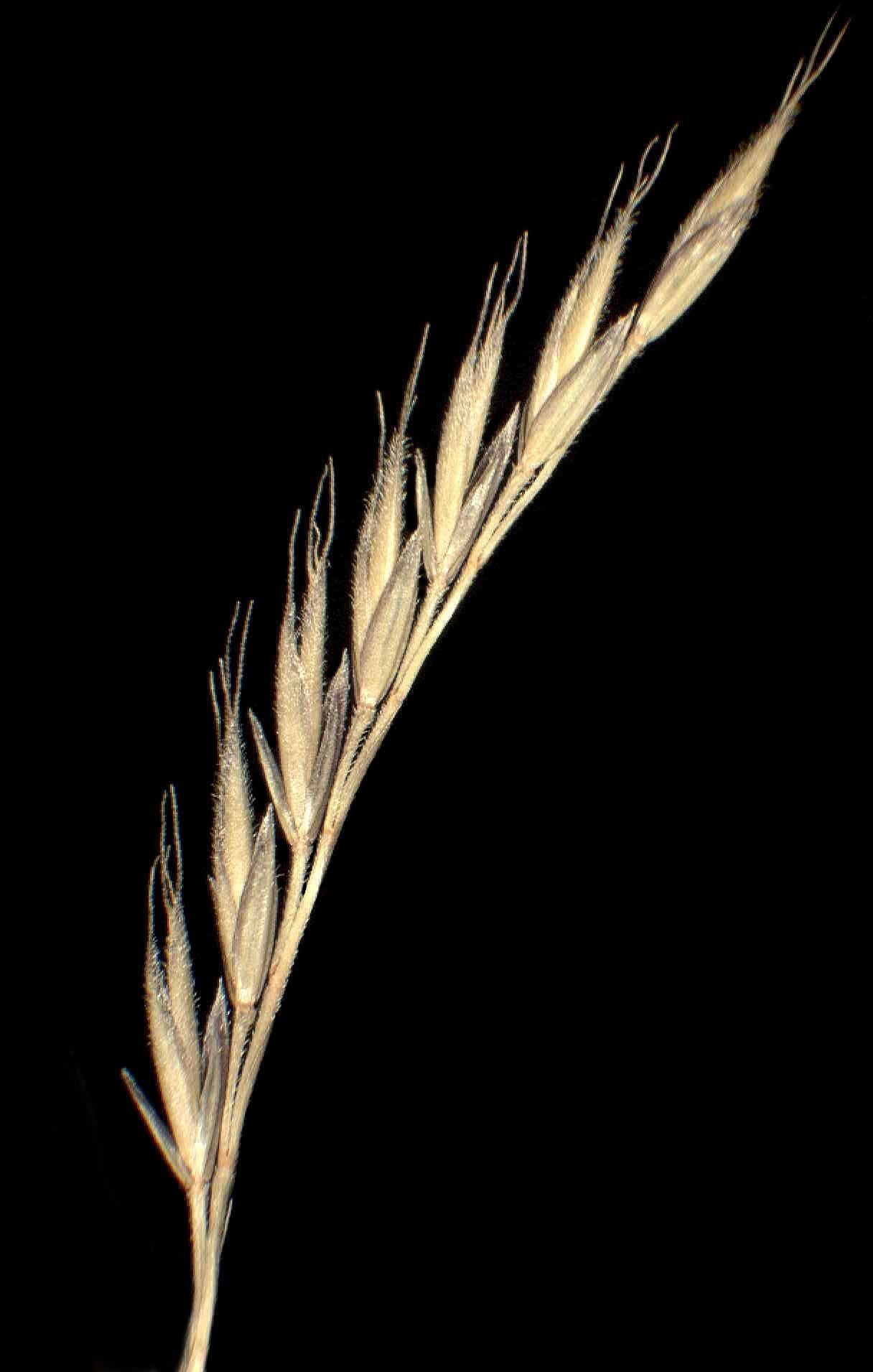 © Dipartimento di Scienze della Vita, Università degli Studi di Trieste<br>by Andrea Moro<br>Pendici del Monte Grappa. , VI, Veneto, Italia, 22/12/04 0.00.00<br>Distributed under CC-BY-SA 4.0 license.