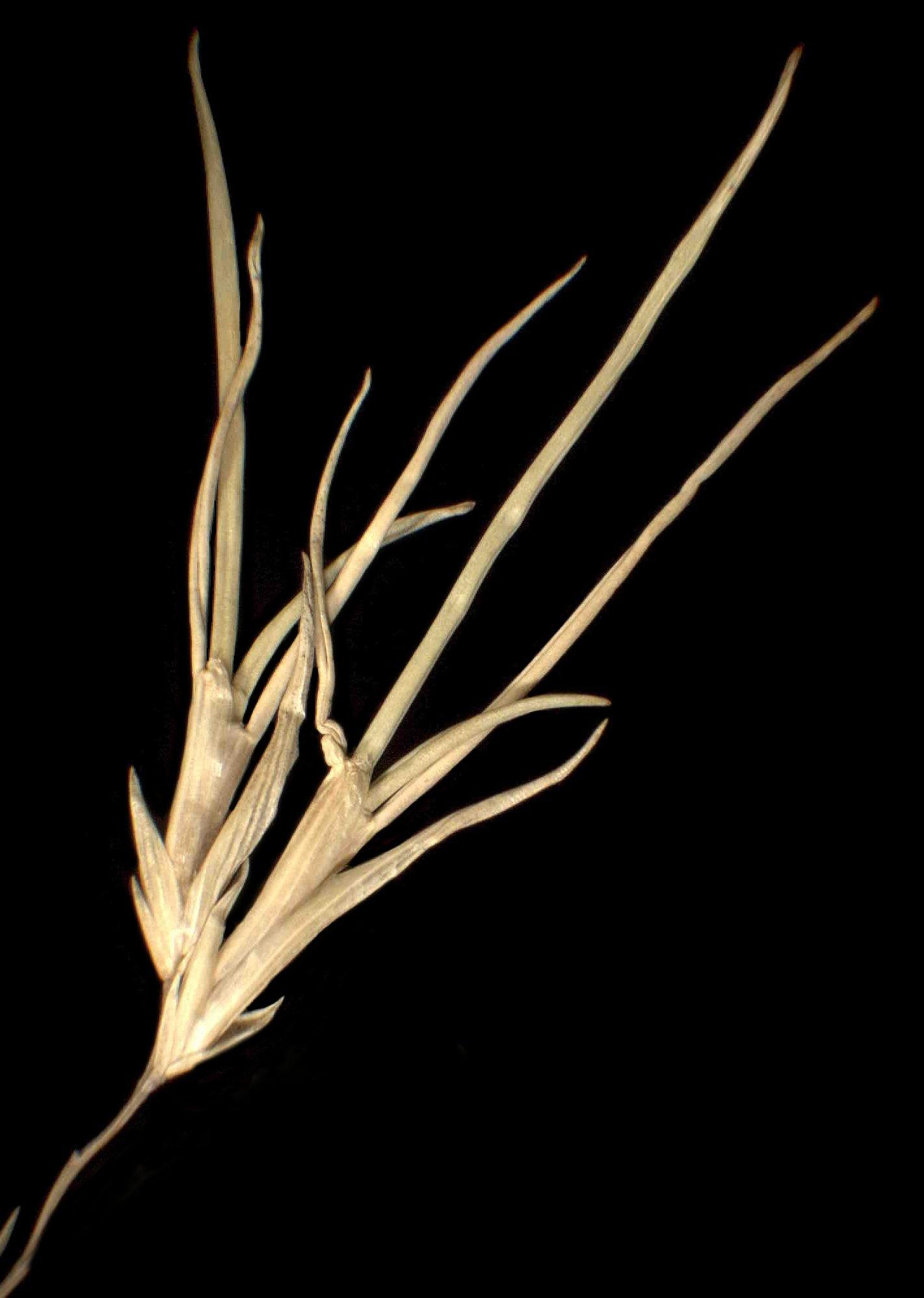 © Dipartimento di Scienze della Vita, Università degli Studi di Trieste<br>by Andrea Moro<br>Valencia Island, Kerry, presso la cava di Glanleam, su ardesia staccata. , Irlanda, 22/12/04 0.00.00<br>Distributed under CC-BY-SA 4.0 license.
