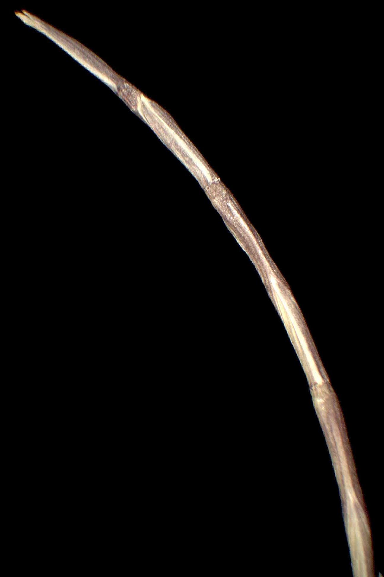 © Dipartimento di Scienze della Vita, Università degli Studi di Trieste<br>by Andrea Moro<br>Comune di Portovenere, Isola di Palmaria, sabbie marine. , SP, Liguria, Italia, 15/1/05 0.00.00<br>Distributed under CC-BY-SA 4.0 license.