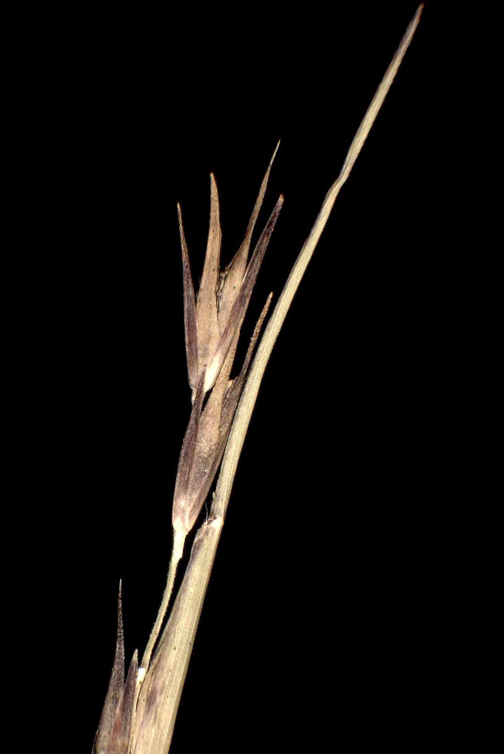 © Dipartimento di Scienze della Vita, Università degli Studi di Trieste<br>by Andrea Moro<br>Comune di Frassineto Po, luogo incolto con radi cespugli a 200 metri dalla riva del Po. , AL, Piemonte, Italia, 15/1/05 0.00.00<br>Distributed under CC-BY-SA 4.0 license.