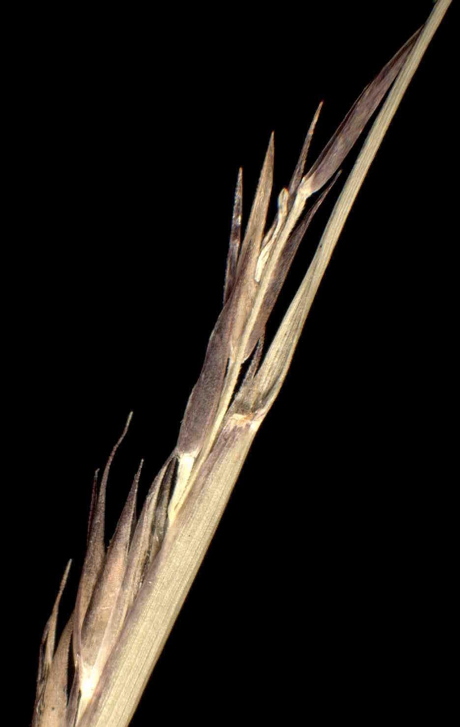 © Dipartimento di Scienze della Vita, Università degli Studi di Trieste<br>by Andrea Moro<br>Comune di Frassineto Po, luogo incolto con radi cespugli, a 200 metri dalla riva del Po. , AL, Piemonte, Italia, 15/1/05 0.00.00<br>Distributed under CC-BY-SA 4.0 license.