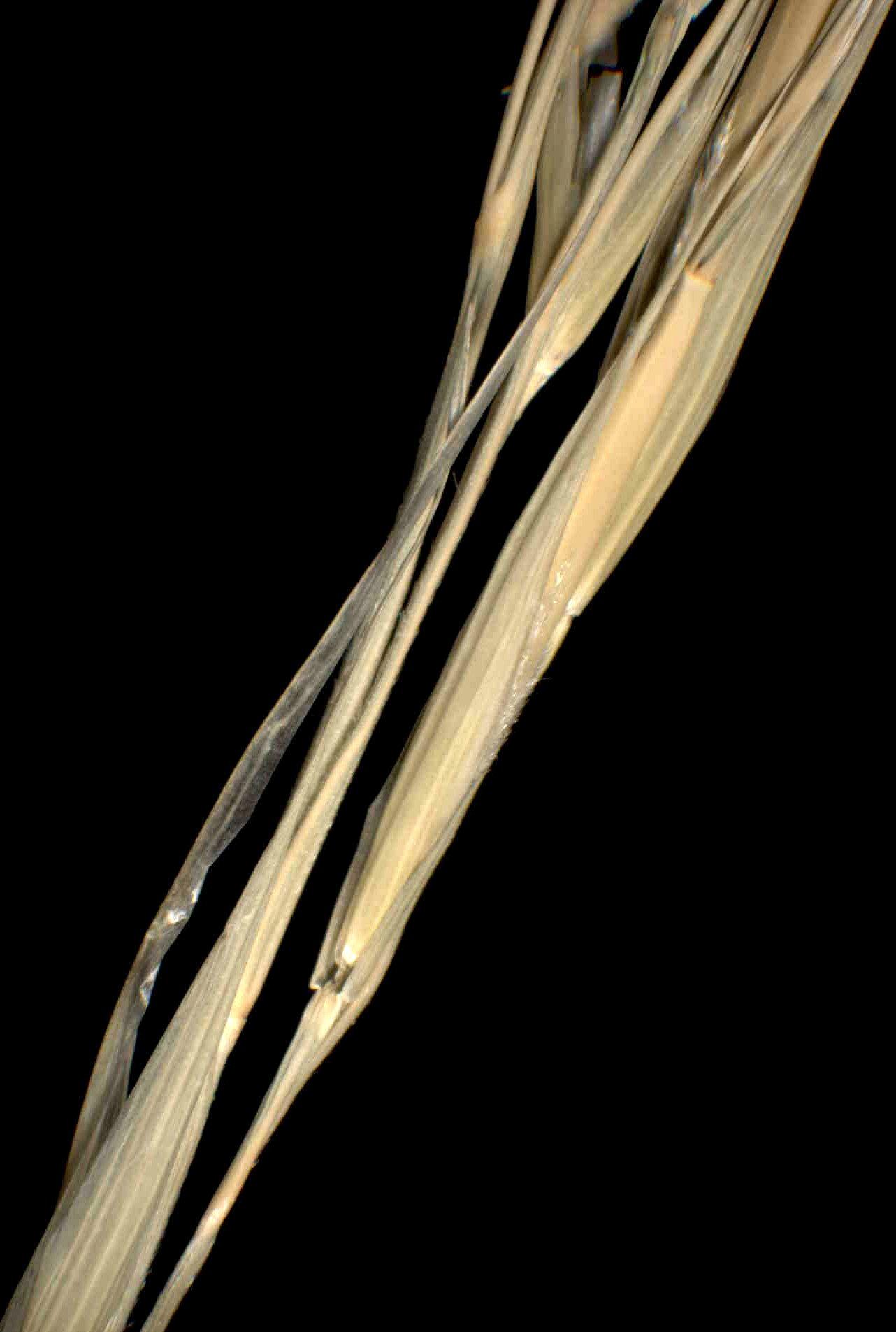 © Dipartimento di Scienze della Vita, Università degli Studi di Trieste<br>by Andrea Moro<br>Carso Sloveno, Orlek, suolo calcareo, Carici-Centauretum rupestris., Slovenia, 15/1/05 0.00.00<br>Distributed under CC-BY-SA 4.0 license.