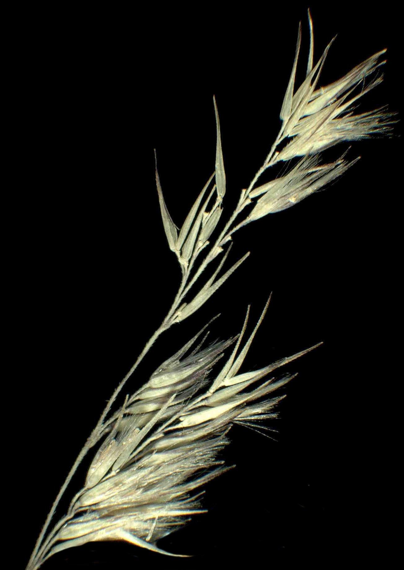 © Dipartimento di Scienze della Vita, Università degli Studi di Trieste<br>by Andrea Moro<br>Carso triestino, Comune di Sgonico, località Bristie. , TS, FVG, Italia, 28/1/05 0.00.00<br>Distributed under CC-BY-SA 4.0 license.