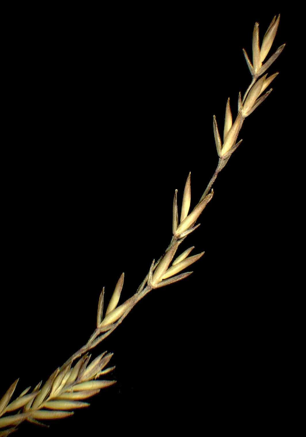 © Dipartimento di Scienze della Vita, Università degli Studi di Trieste<br>by Andrea Moro<br>Carso triestino, Monte Lanaro, sul fondo acidificato di una dolina posta alla base dell'altura. , TS, FVG, Italia, 28/1/05 0.00.00<br>Distributed under CC-BY-SA 4.0 license.