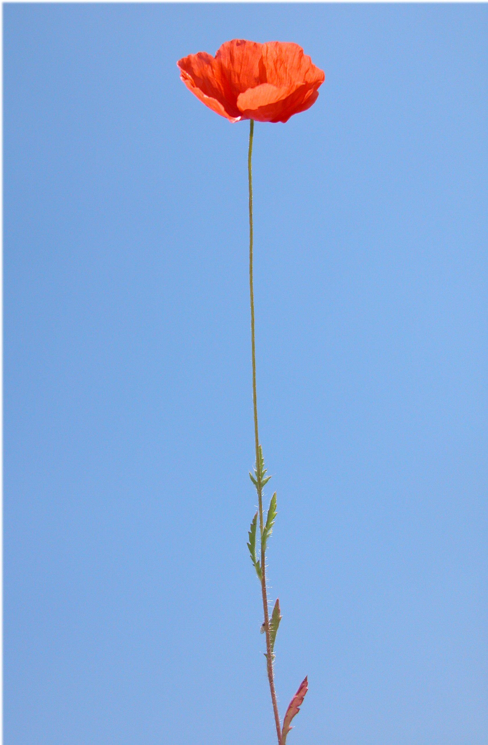 © Dipartimento di Scienze della Vita, Università degli Studi di Trieste<br>by Andrea Moro<br>Autostrada A4, tra Padova Ovest e Vicenza, parcheggio dell'Autogrill Limenella, direzione Vicenza. , PD, Veneto, Italia, 12/5/05 0.00.00<br>Distributed under CC-BY-SA 4.0 license.