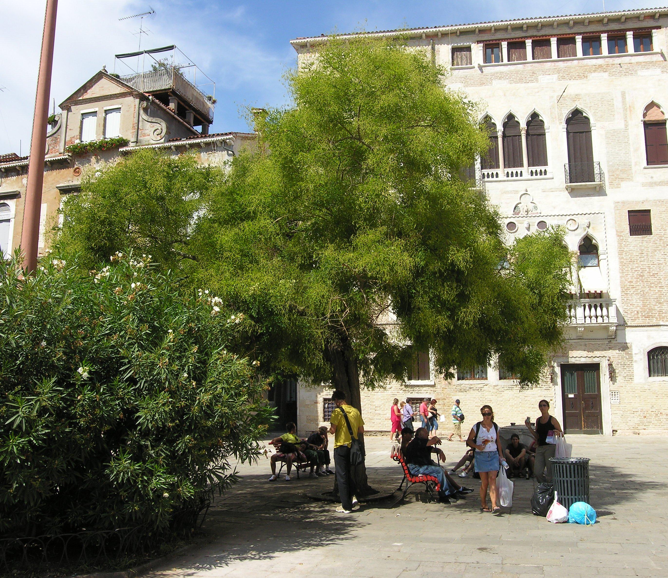 © Dipartimento di Scienze della Vita, Università degli Studi di Trieste<br>by Andrea Moro<br>Venezia, centro storico., VE, Veneto, Italia, 10/09/2007<br>Distributed under CC-BY-SA 4.0 license.