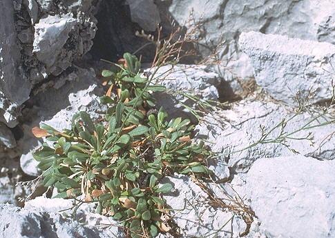 © Hortus Botanicus Catinensis<br>by Pietro Pavone<br>Sicilia, Italia,