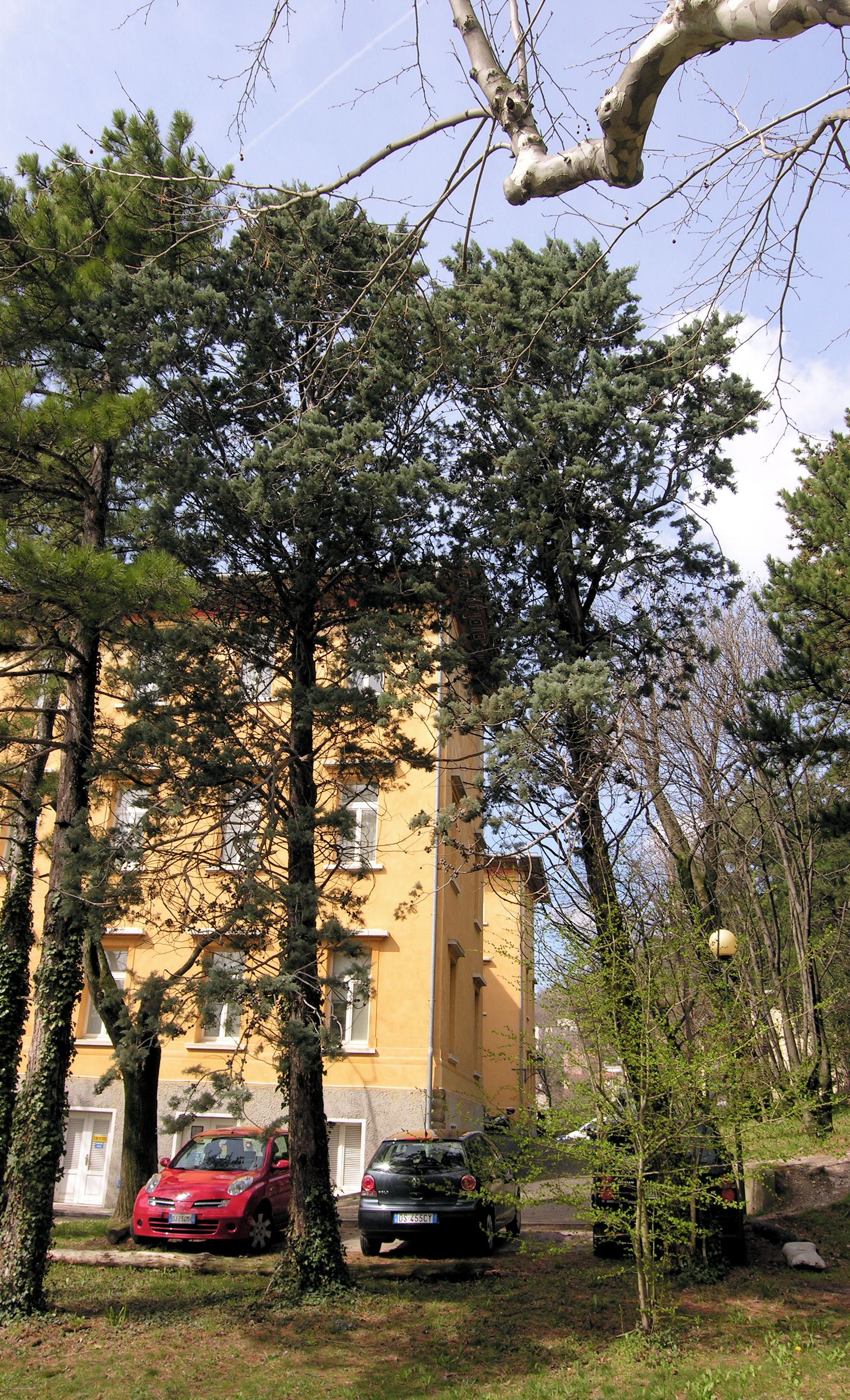 © Dipartimento di Scienze della Vita, Università degli Studi di Trieste<br>by Andrea Moro<br>Comune di Trieste, Parco di San Giovanni, TS, Friuli-Venezia Giulia, Italia, <br>Distributed under CC-BY-SA 4.0 license.