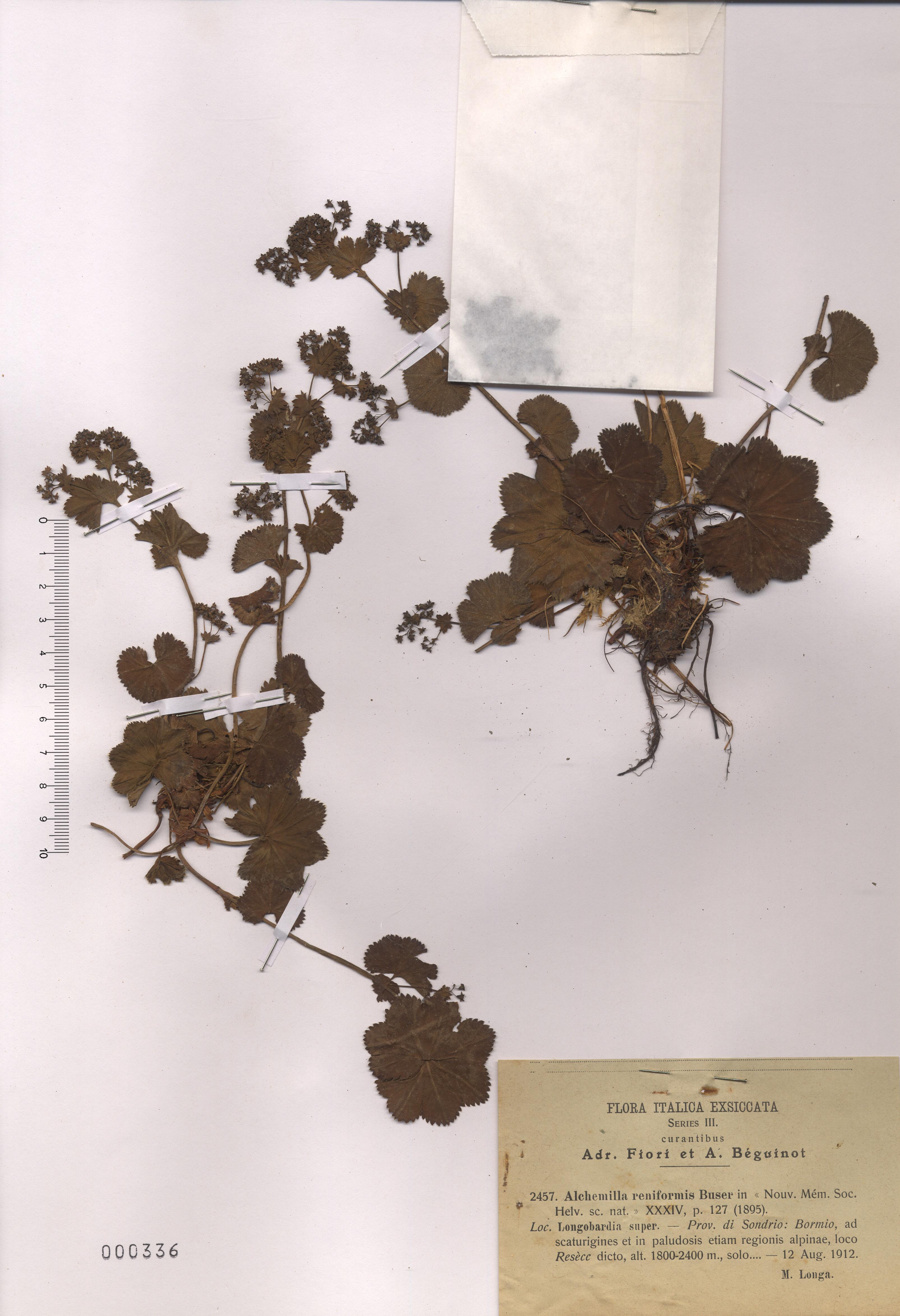© Hortus Botanicus Catinensis - Herb. sheet 000336<br>