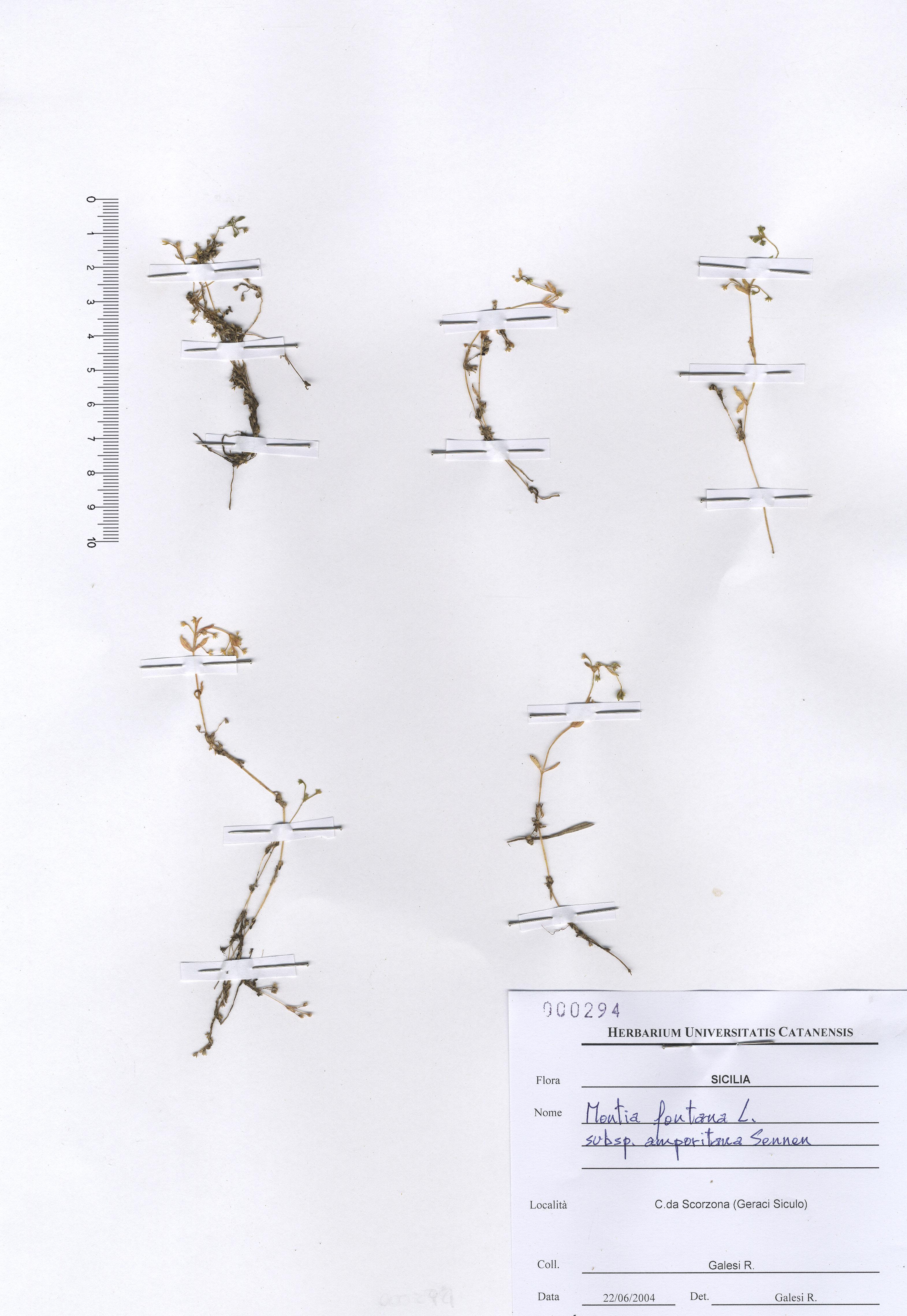 © Hortus Botanicus Catinensis - Herb. sheet 000294<br>