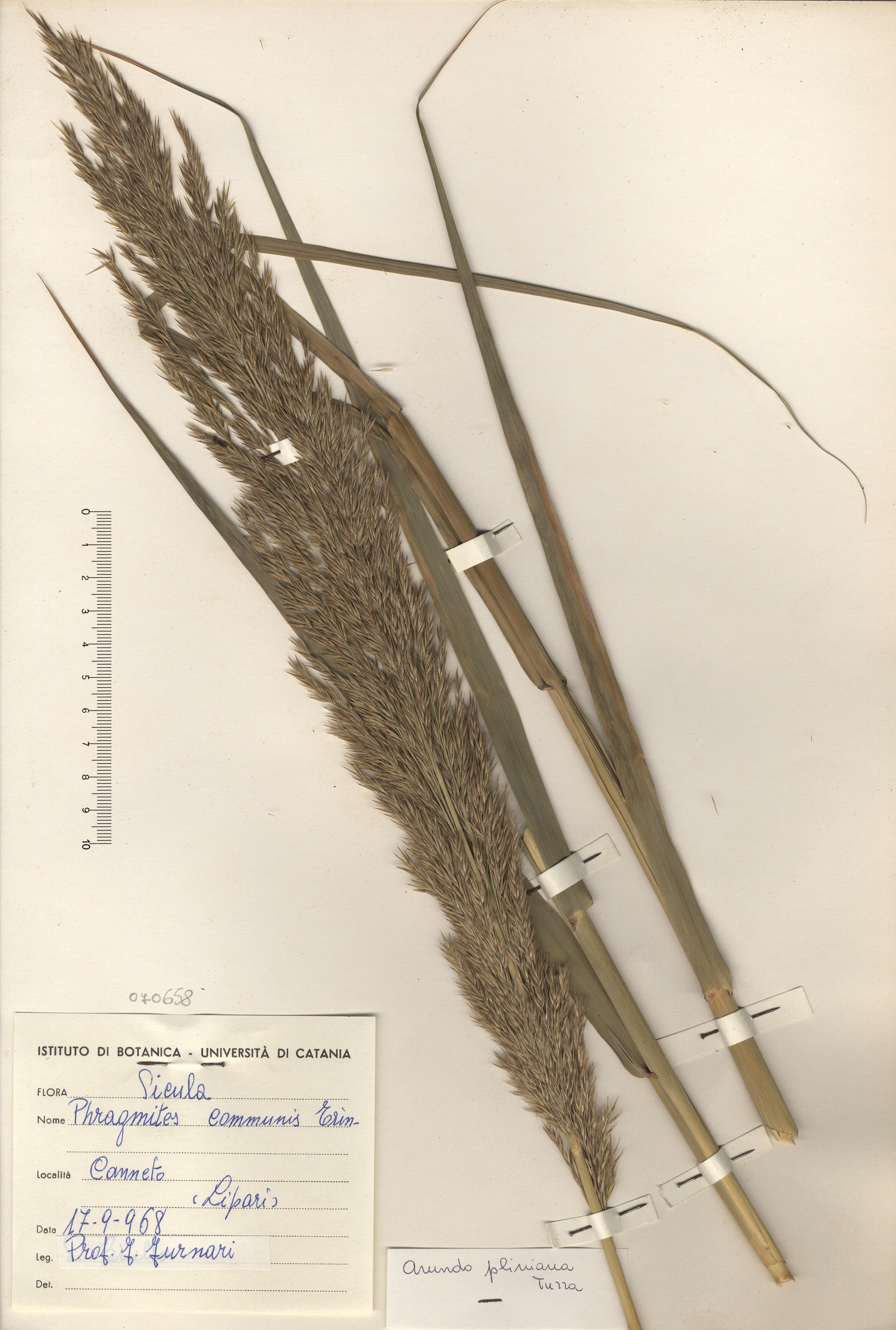 © Hortus Botanicus Catinensis - Herb. sheet 070658<br>