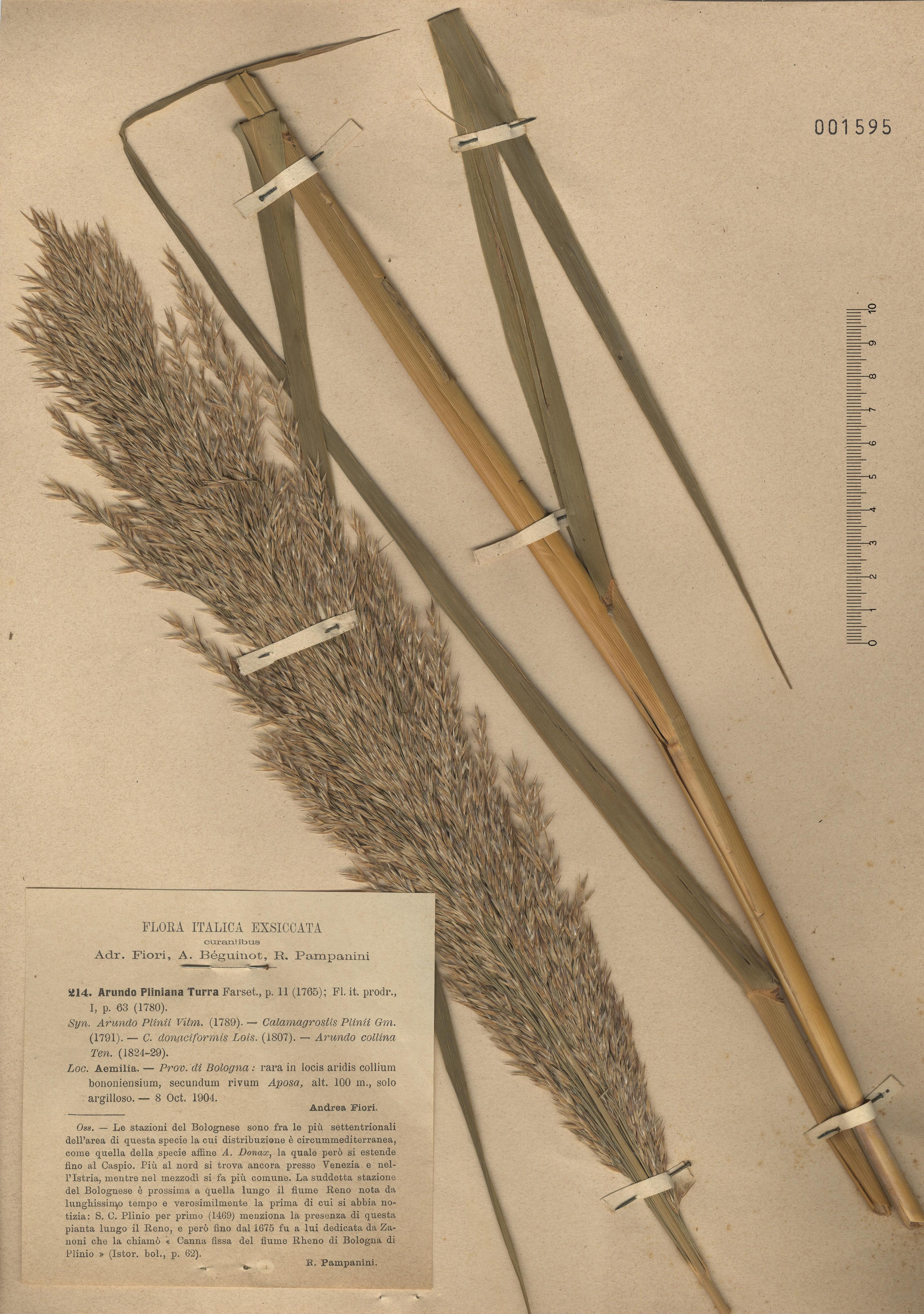 © Hortus Botanicus Catinensis - Herb. sheet 001595<br>