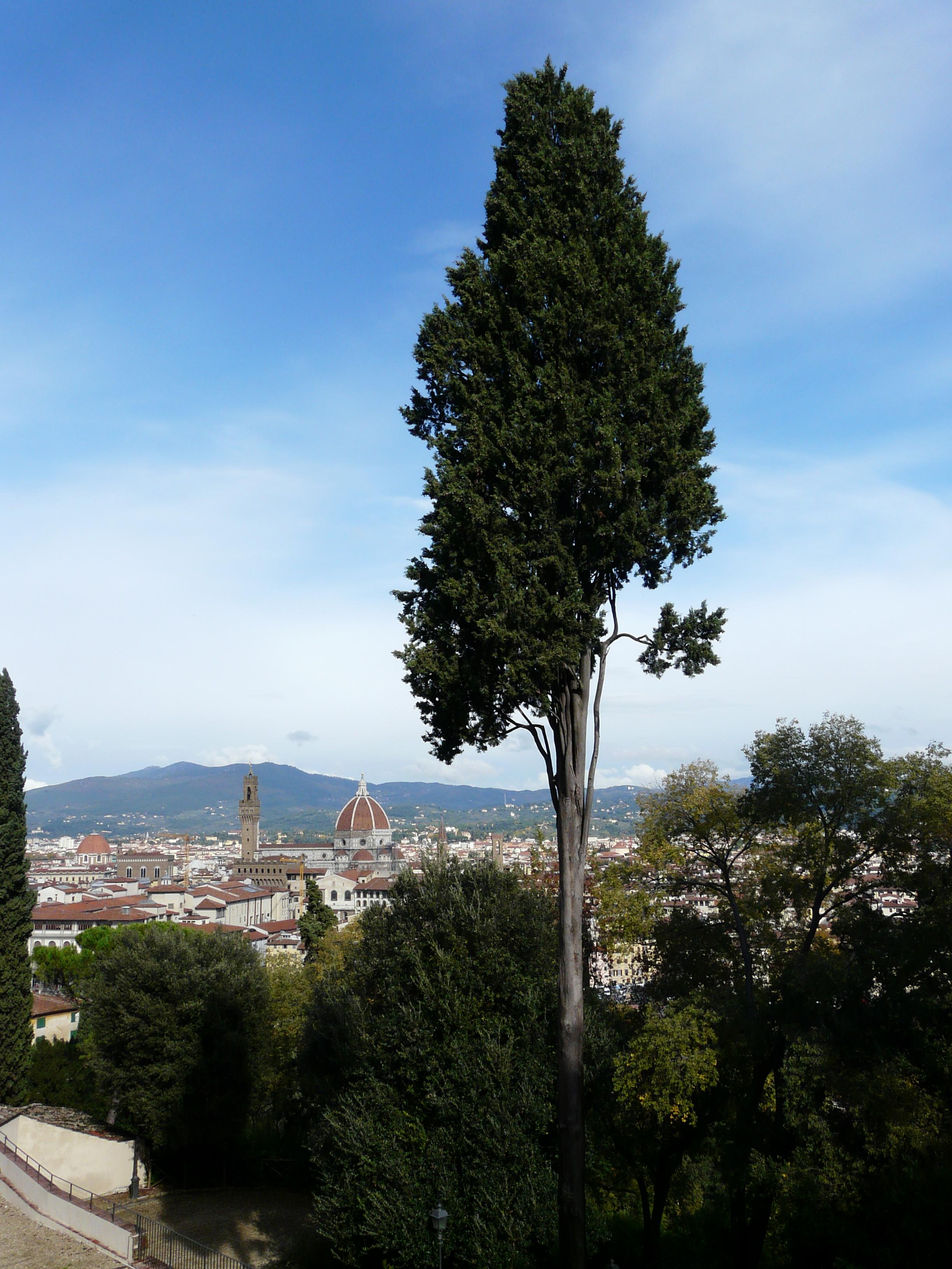 © Dipartimento di Scienze della Vita, Università degli Studi di Trieste<br>by Andrea Moro<br>Firenze, Giardino Bardini, FI, Toscana, Italia, 02/11/2010<br>Distributed under CC-BY-SA 4.0 license.