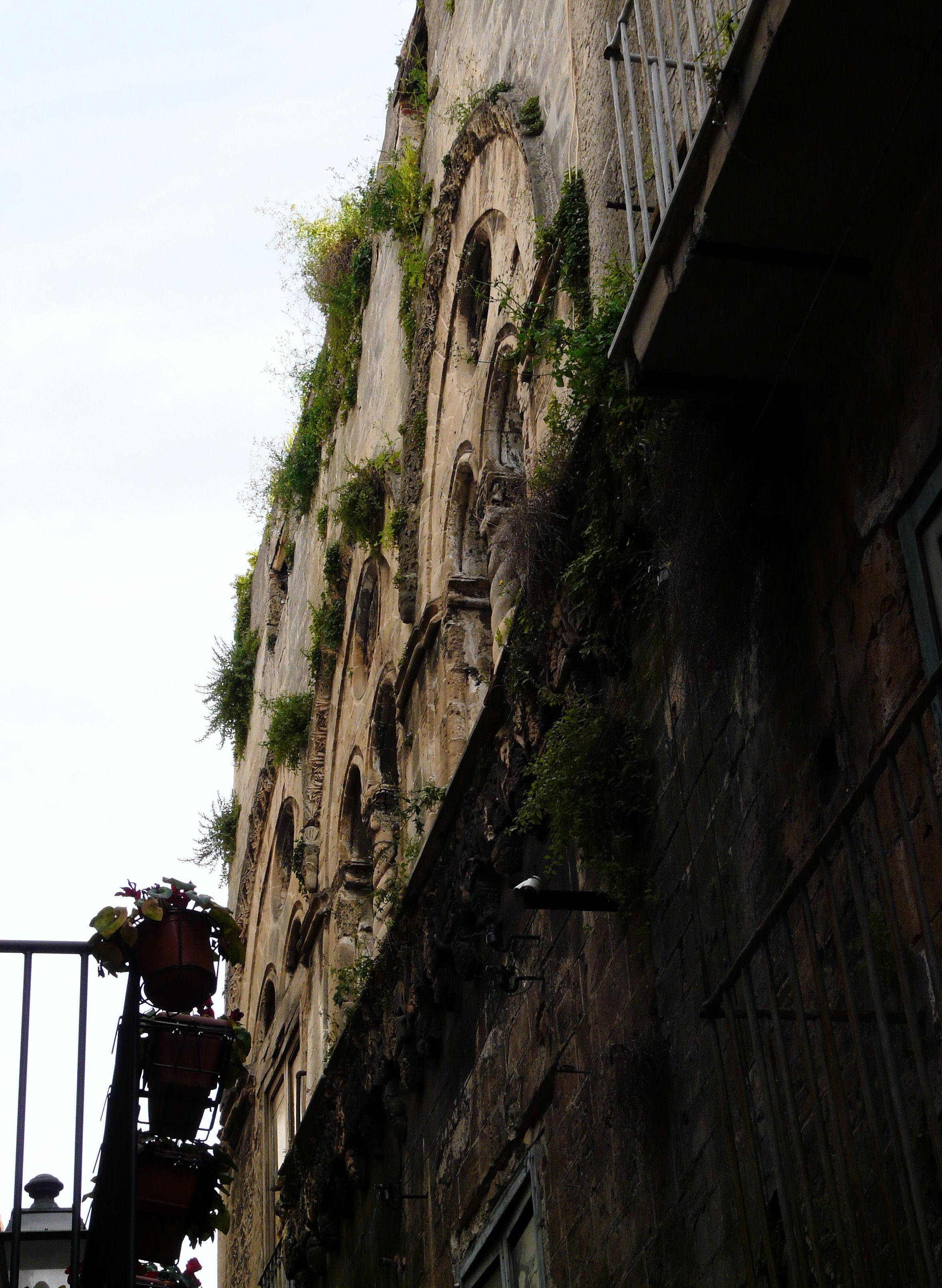 © Dipartimento di Scienze della Vita, Università degli Studi di Trieste<br>by Andrea Moro<br>Comune di Palermo, centro storico, PA, Sicilia, Italia, 09/04/2008<br>Distributed under CC-BY-SA 4.0 license.