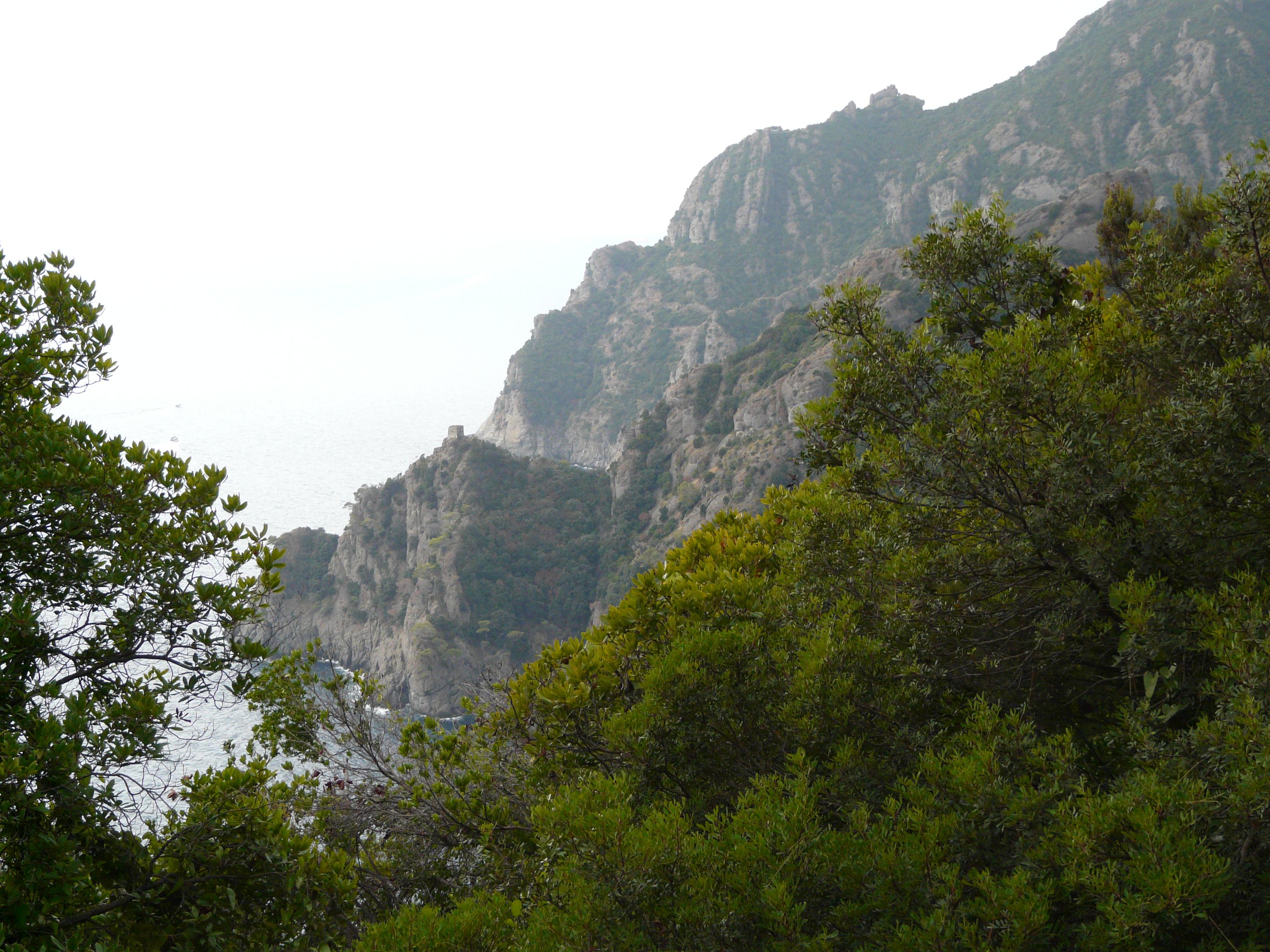 © Dipartimento di Scienze della Vita, Università degli Studi di Trieste<br>by Andrea Moro<br>Comune di Portofino, lungo il sentiero per San Fruttuoso, GE, Liguria, Italia, 08/09/2009<br>Distributed under CC-BY-SA 4.0 license.