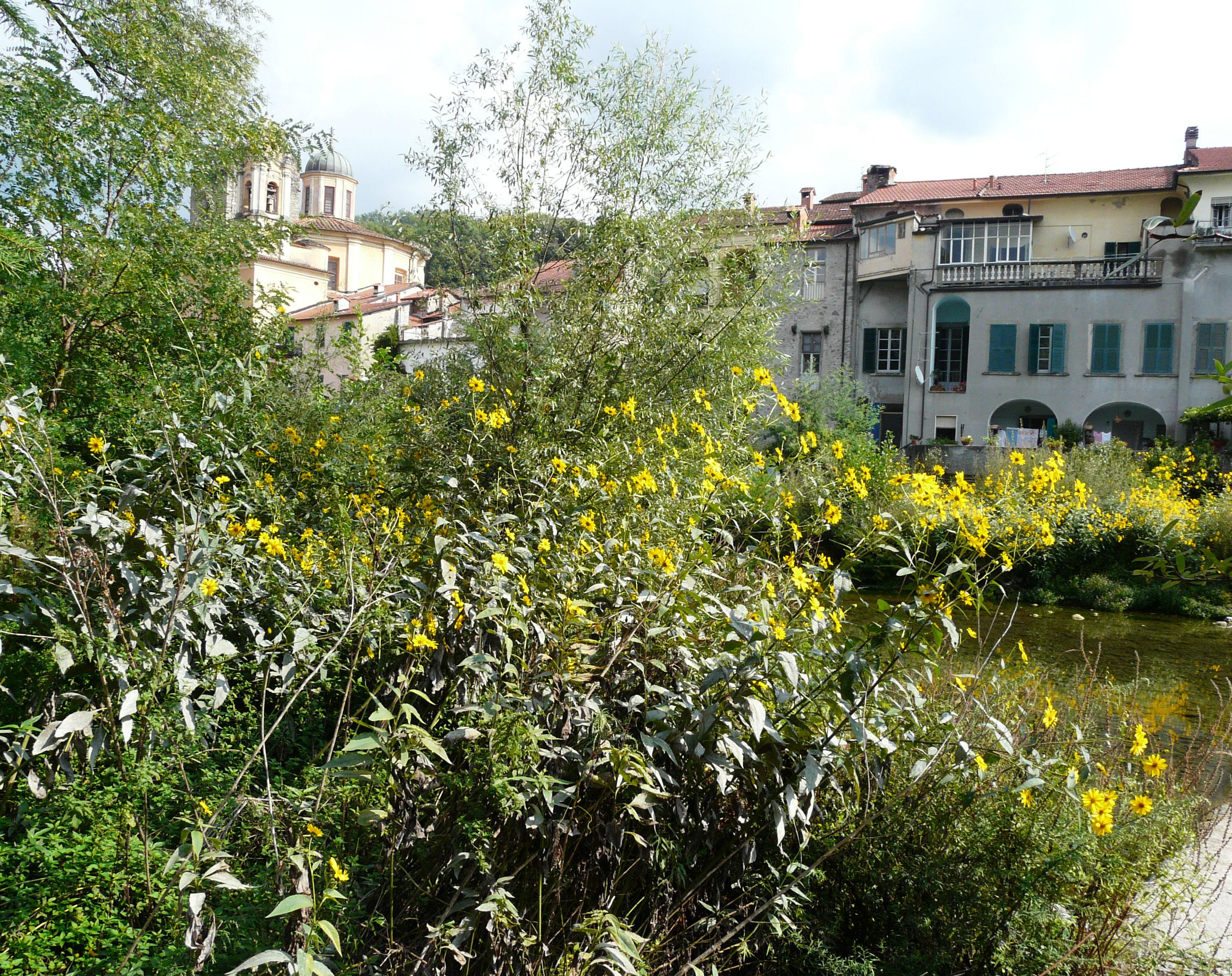 © Dipartimento di Scienze della Vita, Università degli Studi di Trieste<br>by Andrea Moro<br>Comune di Pontremoli, lungo il fiume, MS, Toscana, Italia, 21/09/2008<br>Distributed under CC-BY-SA 4.0 license.