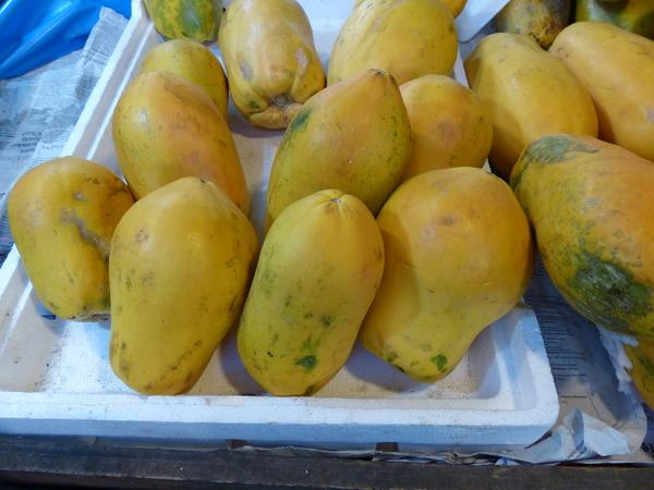 Carica papaya L.