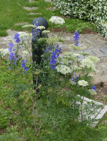 Katapsuxis silaifolia (Jacq.) Reduron, Charpin & Pimenov