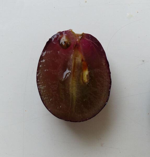 Vitis vinifera L. s.l.