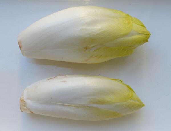 Cichorium intybus L. 'Belga'