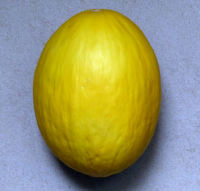 Cucumis melo L. 'Yellow Honeydew'