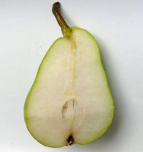 Pyrus communis L. 'Abate Fétel'