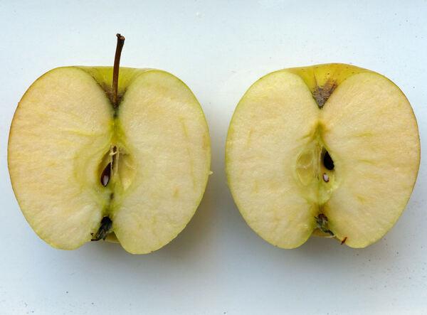 Malus domestica (Borkh.) Borkh. 'Golden Delicious'