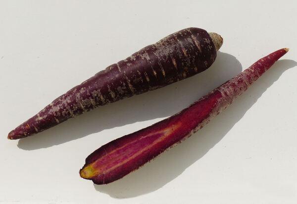 Daucus carota L. 'Pusa Asita'