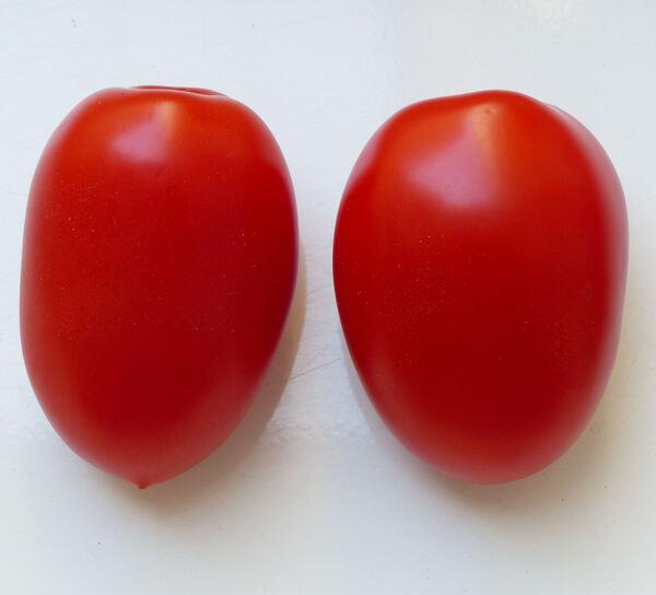 Solanum lycopersicum L. 'Perino Rosso'