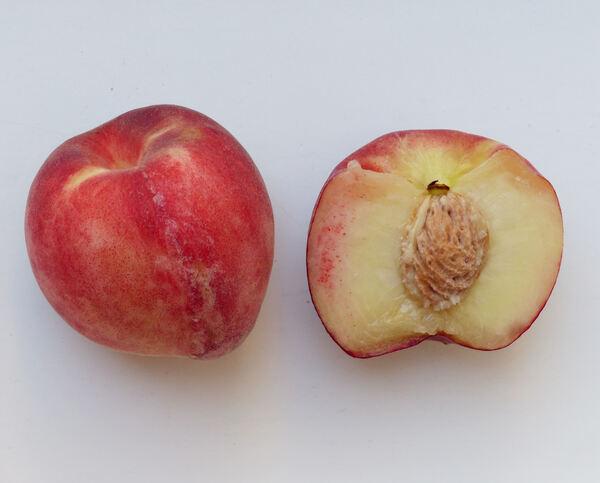 Prunus persica (L.) Batsch 'Maura'