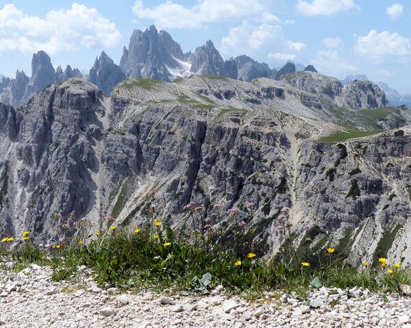 Valeriana montana L.